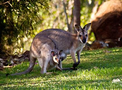 Reiseinformationen für Australien und Ozeanien