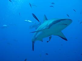 Verhaltenstipps: Haie