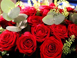 Rote Rosen - Leidenschaft