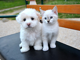 Reisen mit Haustieren (Heimtieren) – Außerhalb der Europäischen Union (EU) gibt es unterschiedliche Regelungen