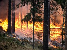 Waldbrand - flüchten Sie quer zur Windrichtung
