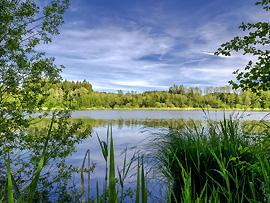 Wasserpflanzen in natürlichen Gewässern