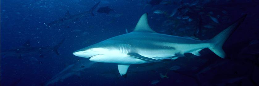Empfehlungen der Hai-Experten