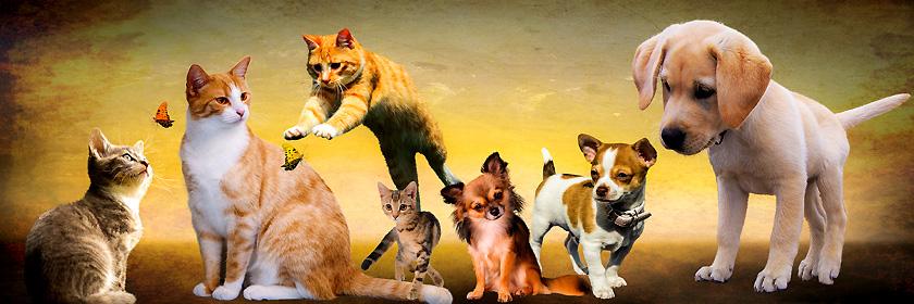 Reisen mit Haustieren (Heimtieren) – Ein Gesundheitszeugnis und ein Tollwutimpfzertifikat ist eine Grundvoraussetzung